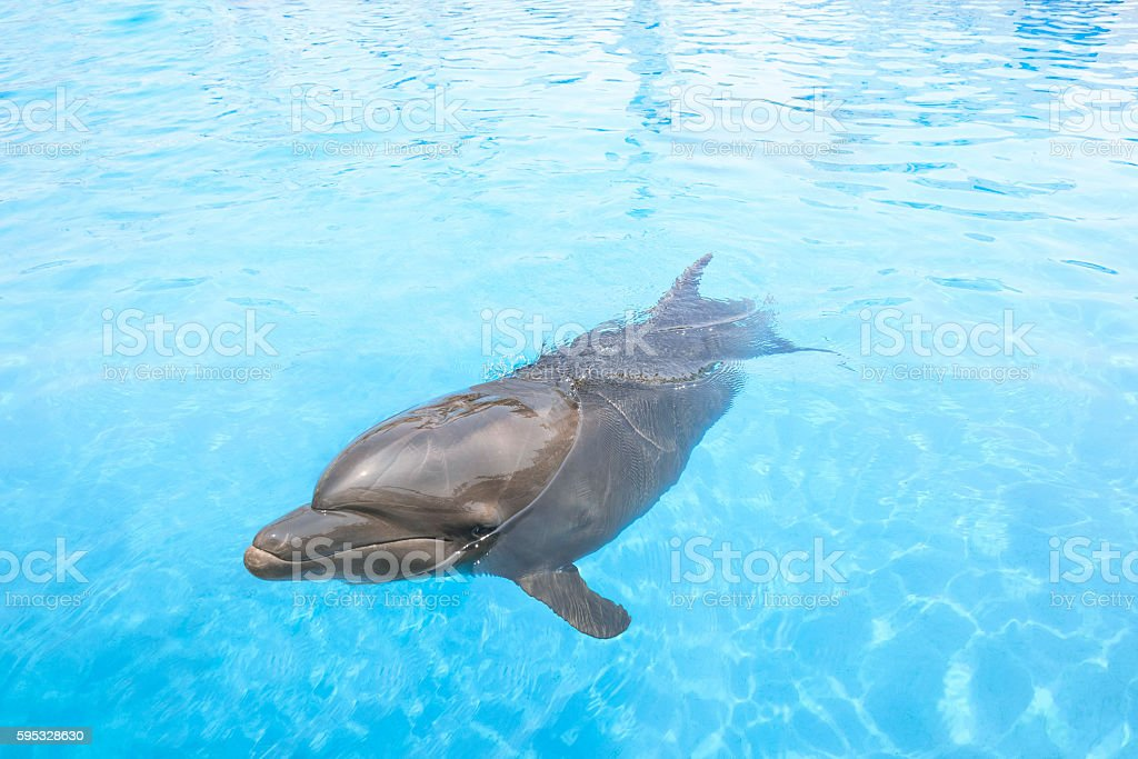 Happy dolphin in the pool. stock photo