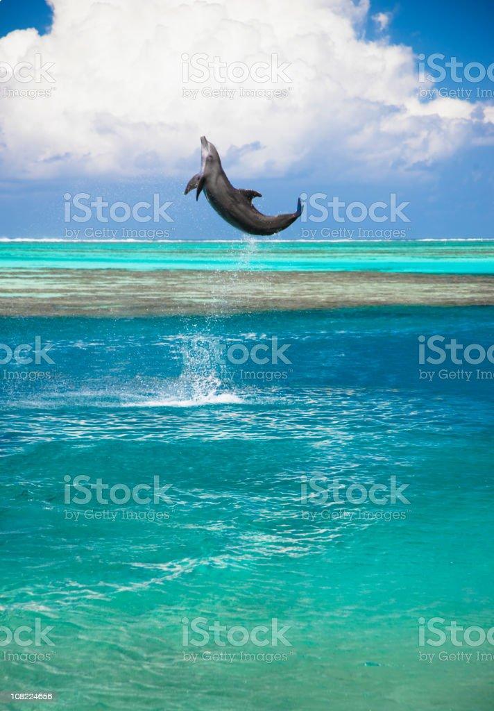 Happy Dolphin Jumping stock photo
