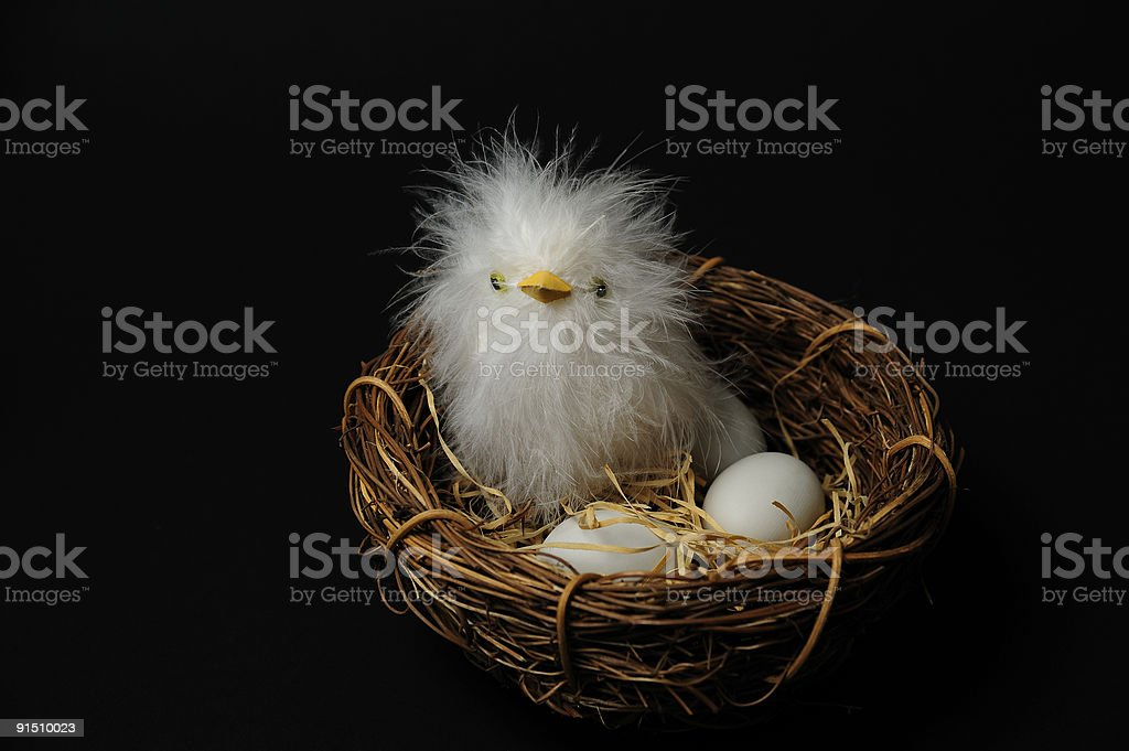 Happy Easter chicken in nest with eggs against black background. royalty-free stock photo