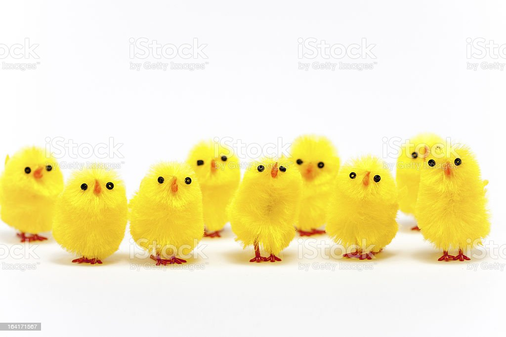 Happy Easter Chickens Standing royalty-free stock photo