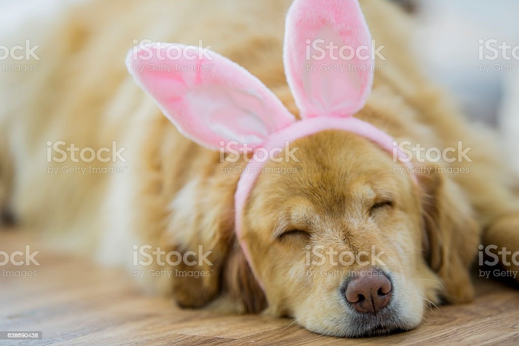 Happy Easter Dog Napping stock photo