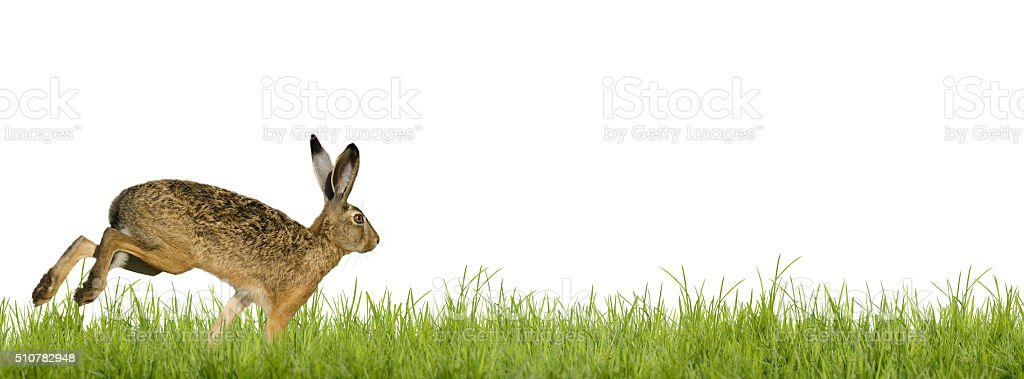 Happy Easter; easter bunny stock photo