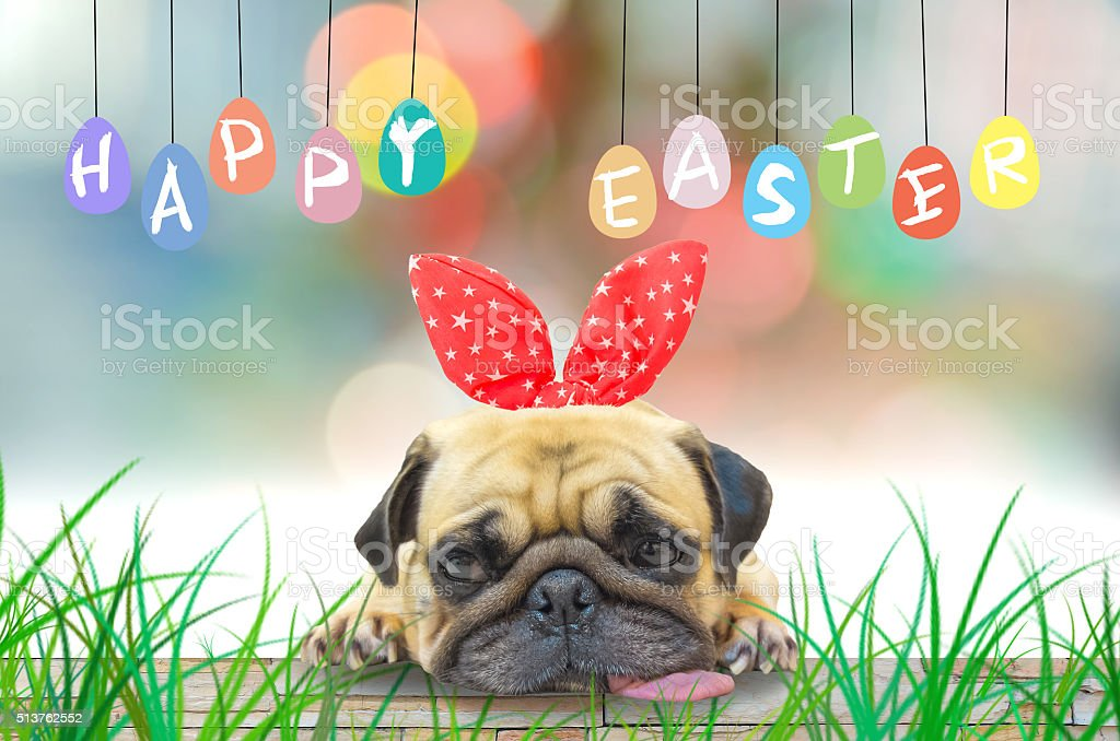 Happy Easter. Pug wearing rabbit ears pastel colorful eggs. stock photo