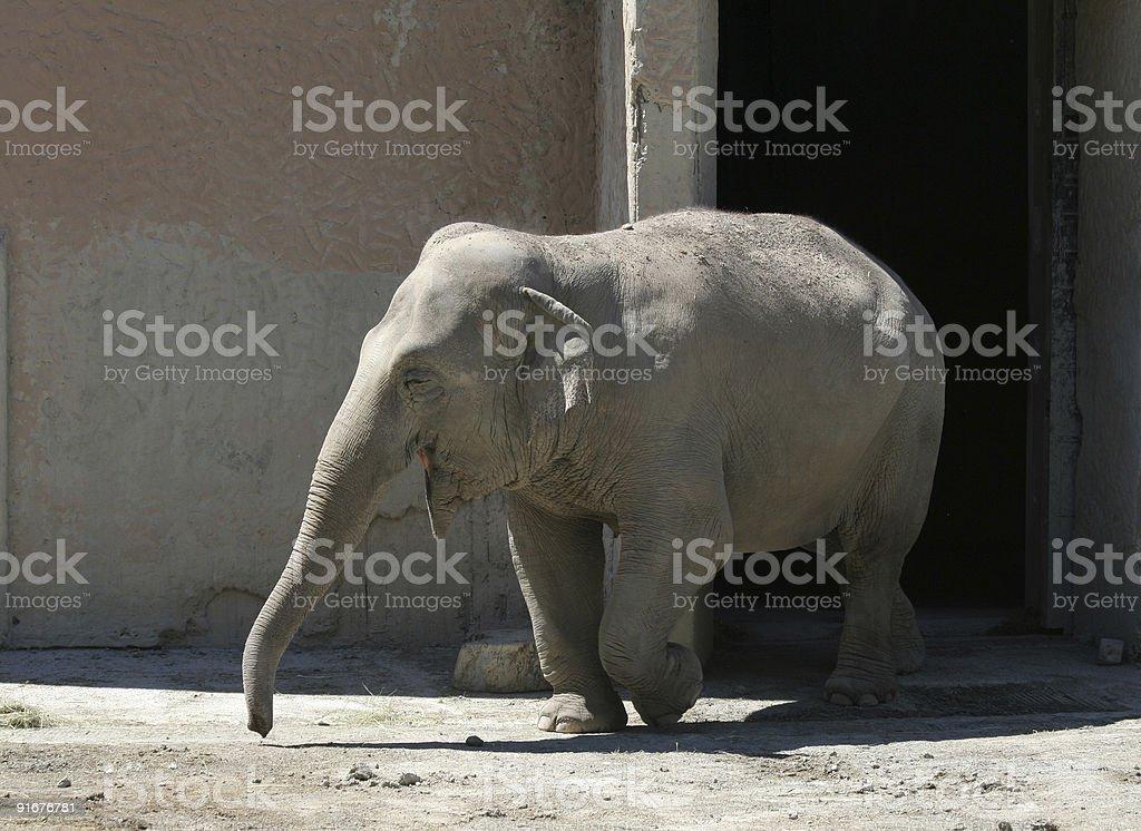 Happy elephant royalty-free stock photo