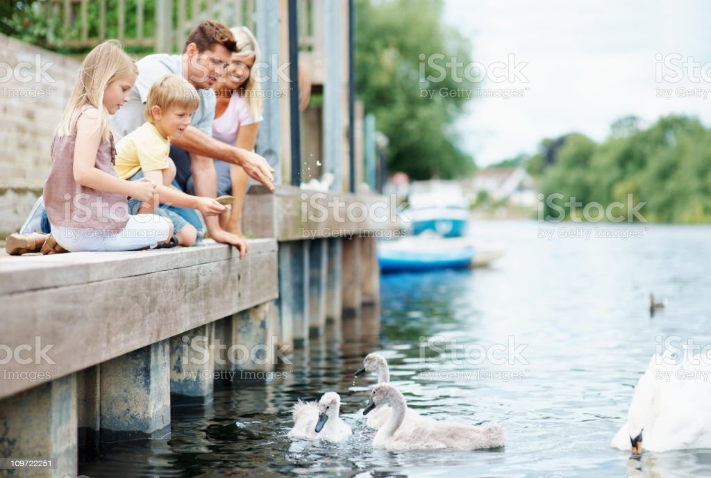Happy family feeding swans by the lake royalty-free stock photo