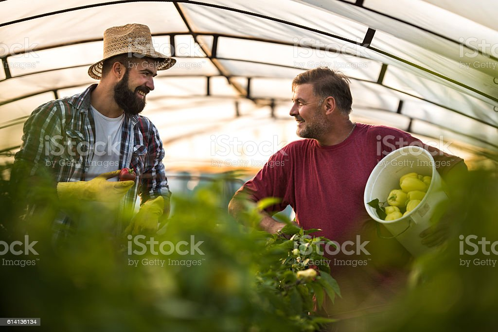 Happy farm workers talking to each other in polyethylene tunnel. stock photo