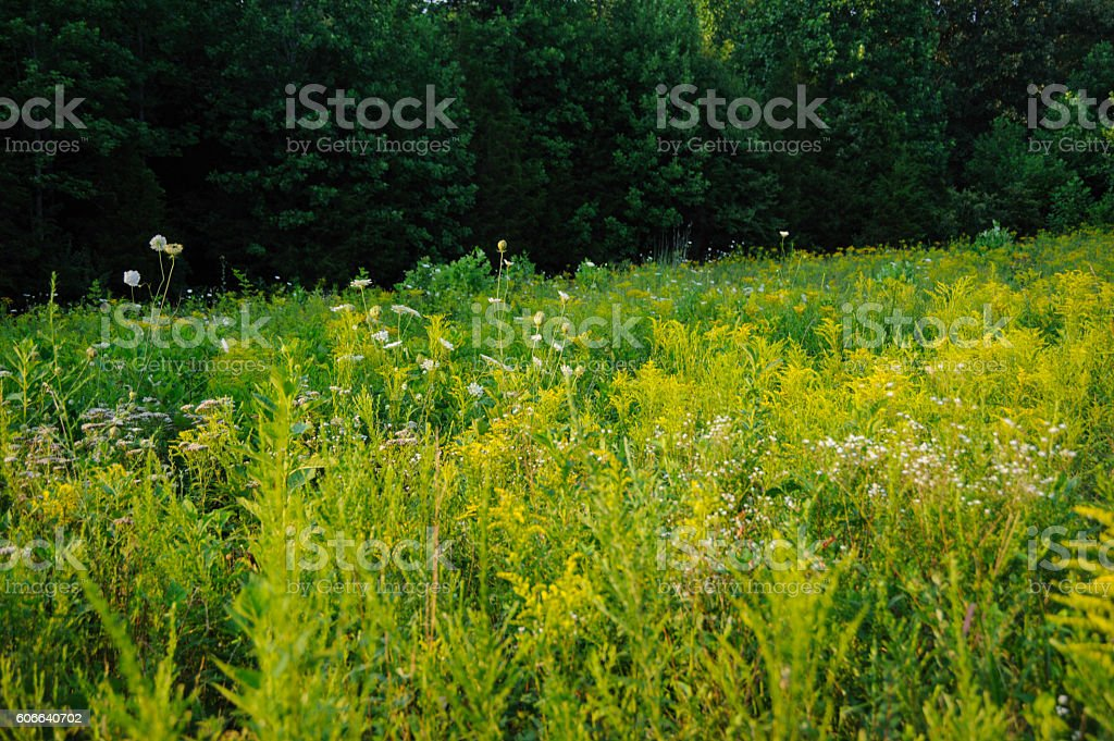 Happy Field of Weeds stock photo