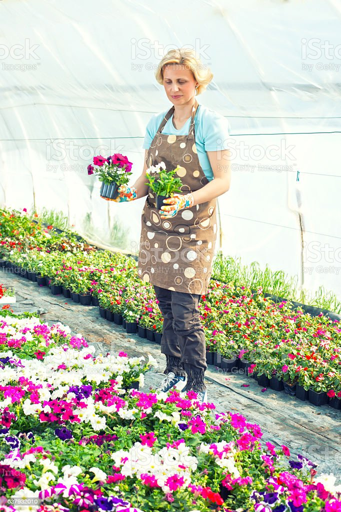 Happy florist holding flowers in a greenhouse stock photo