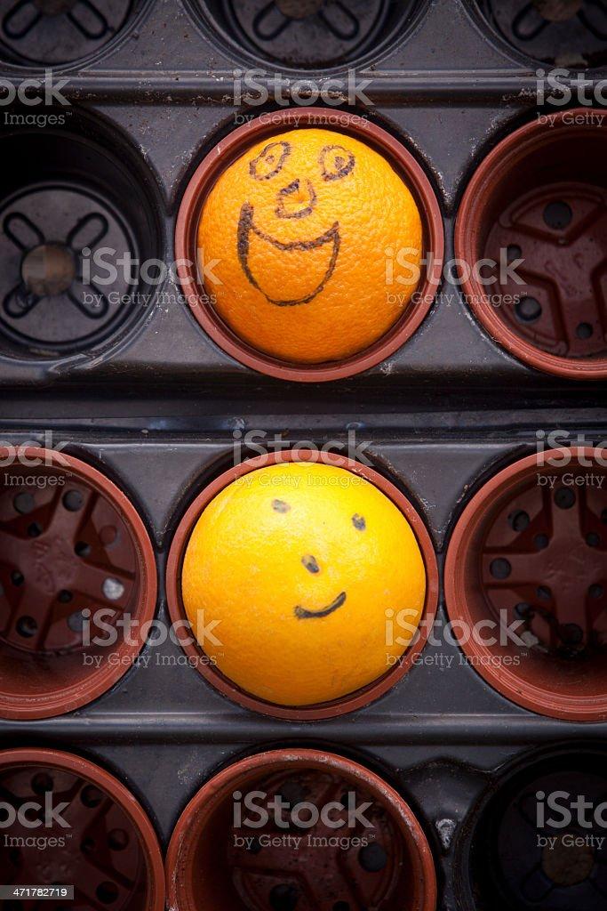 Happy Fruit royalty-free stock photo
