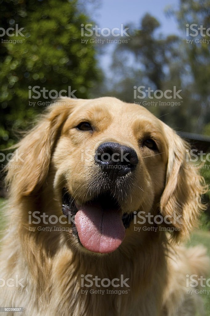 Happy Golden royalty-free stock photo