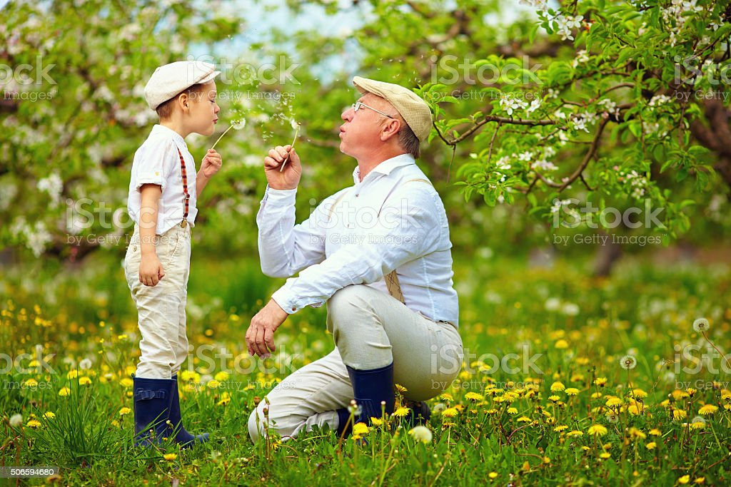 happy grandpa with grandson blowing dandelions in spring garden stock photo