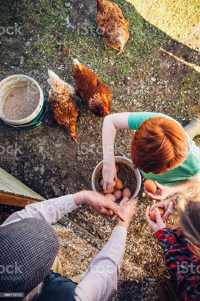 Happy Hens stock photo