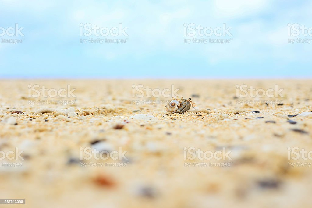 Happy Hermit crab of Okinawa stock photo