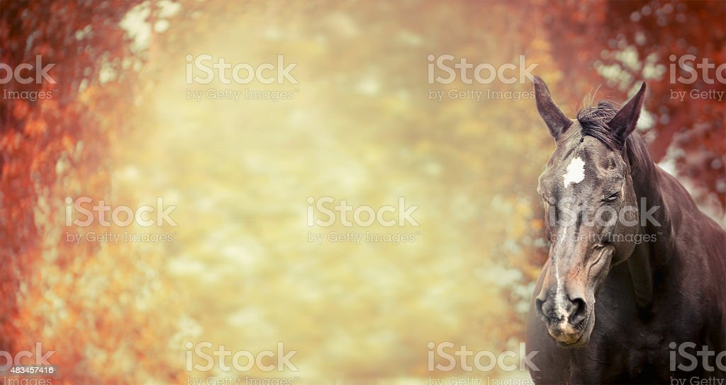 Happy horse on autumn natur foliage background, banner for website stock photo