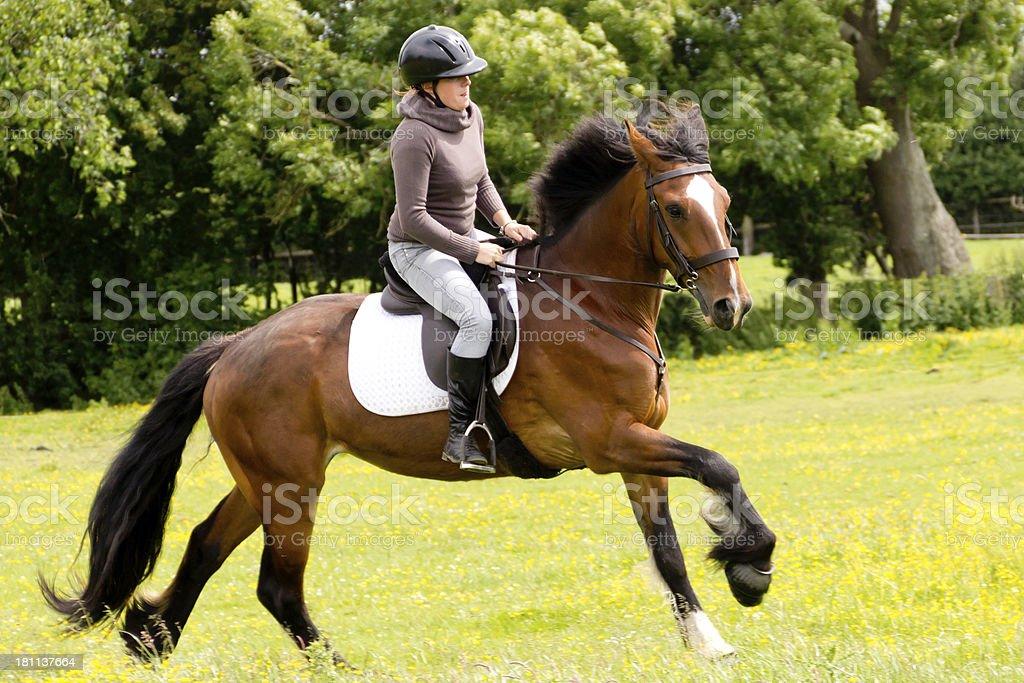 Happy Horse royalty-free stock photo