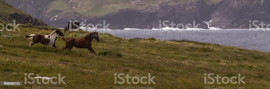 Happy Horses stock photo