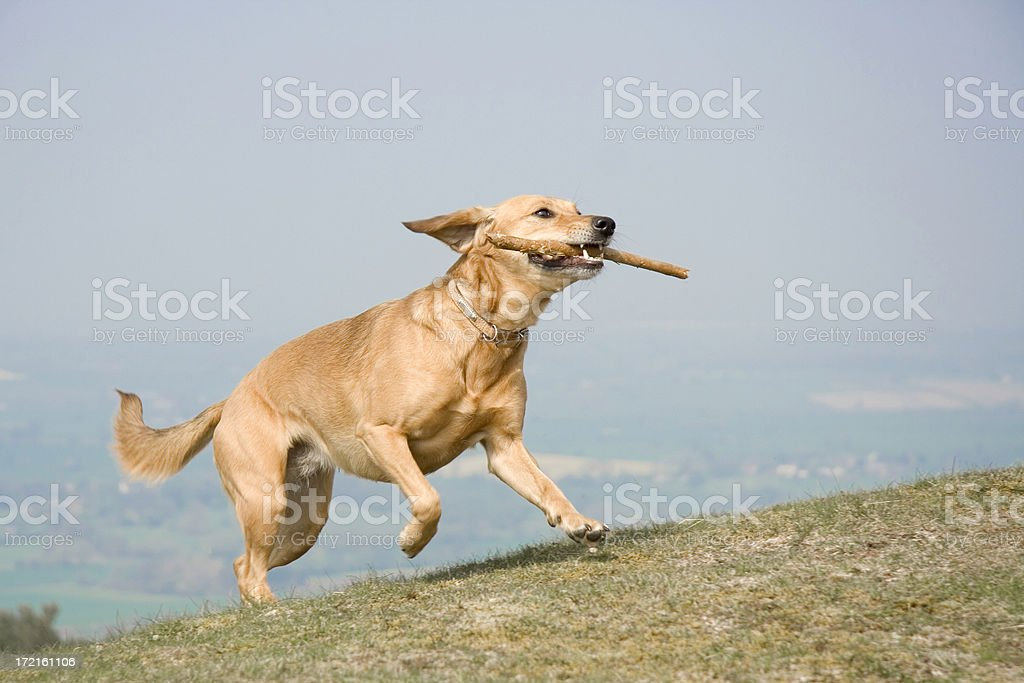 happy hound royalty-free stock photo