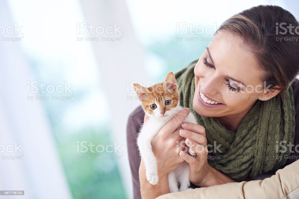 Happy is the one who owns a cat stock photo