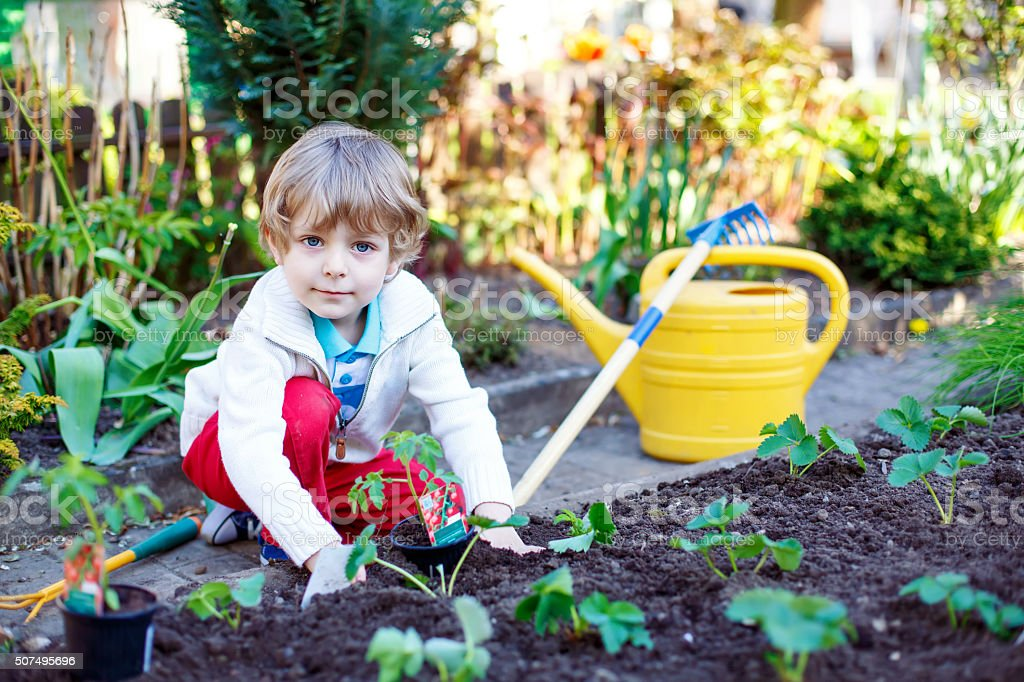 Happy kid boy planting seeds of tomatoes stock photo