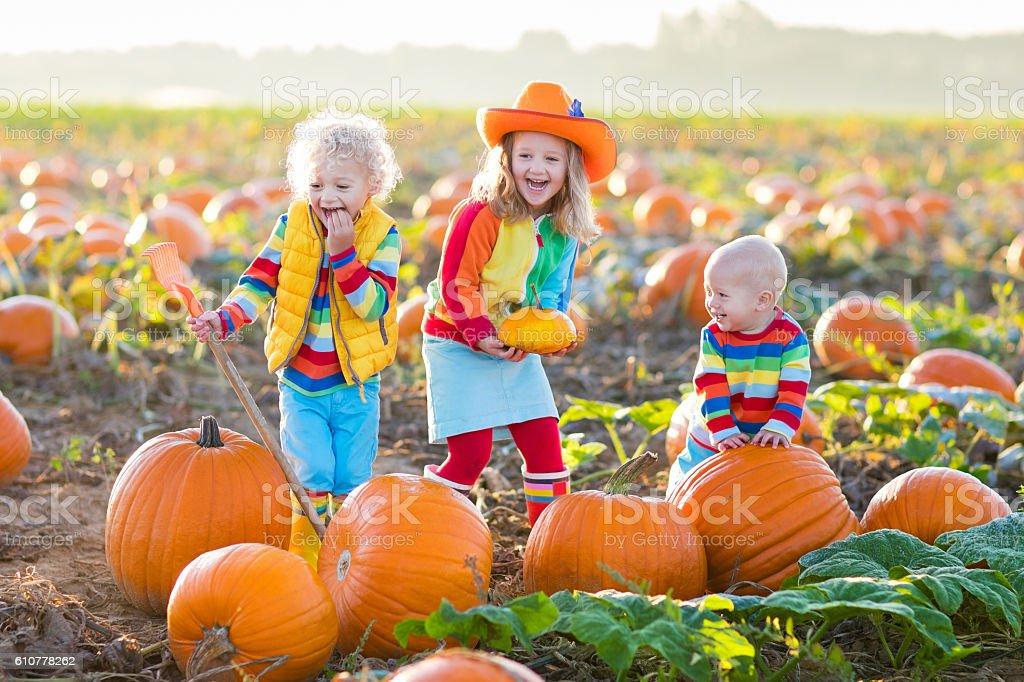 Happy kids picking pumpkins on Halloween pumpkin patch stock photo
