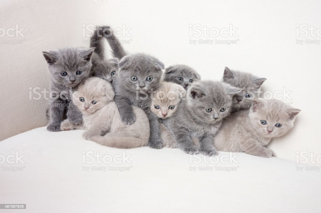 Happy Kitten Family stock photo