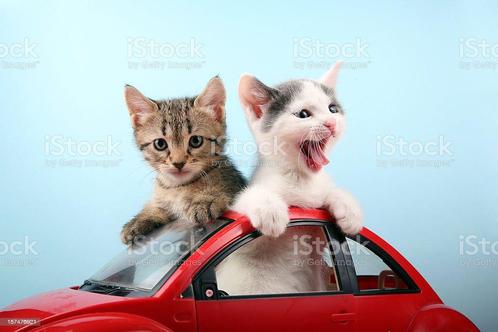 Happy kittens on vacations stock photo