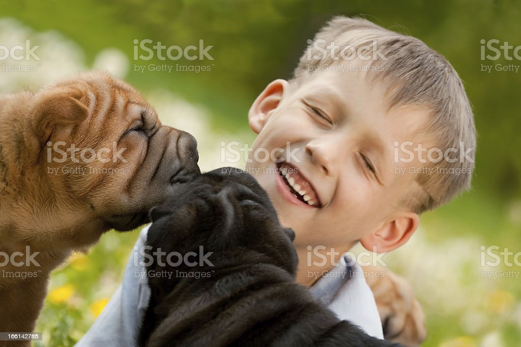 Happy Little Boy and Two Shar-Pei Dogs. royalty-free stock photo