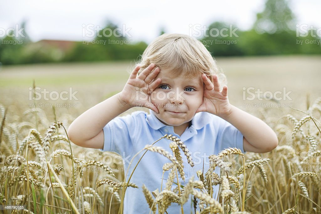 Happy little boy having fun in wheat field summer stock photo