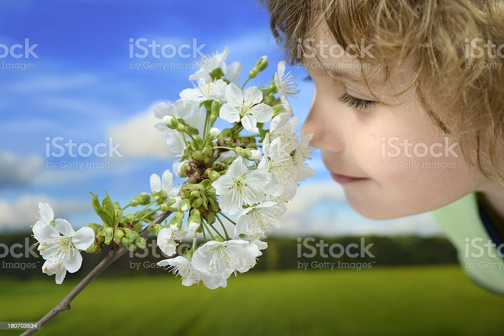 Happy little boy smelling cherry flowers in time of spring royalty-free stock photo