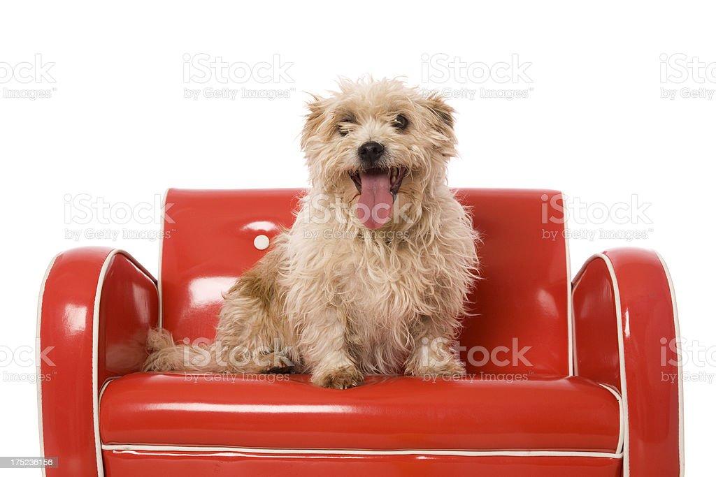 Happy Little Dog royalty-free stock photo