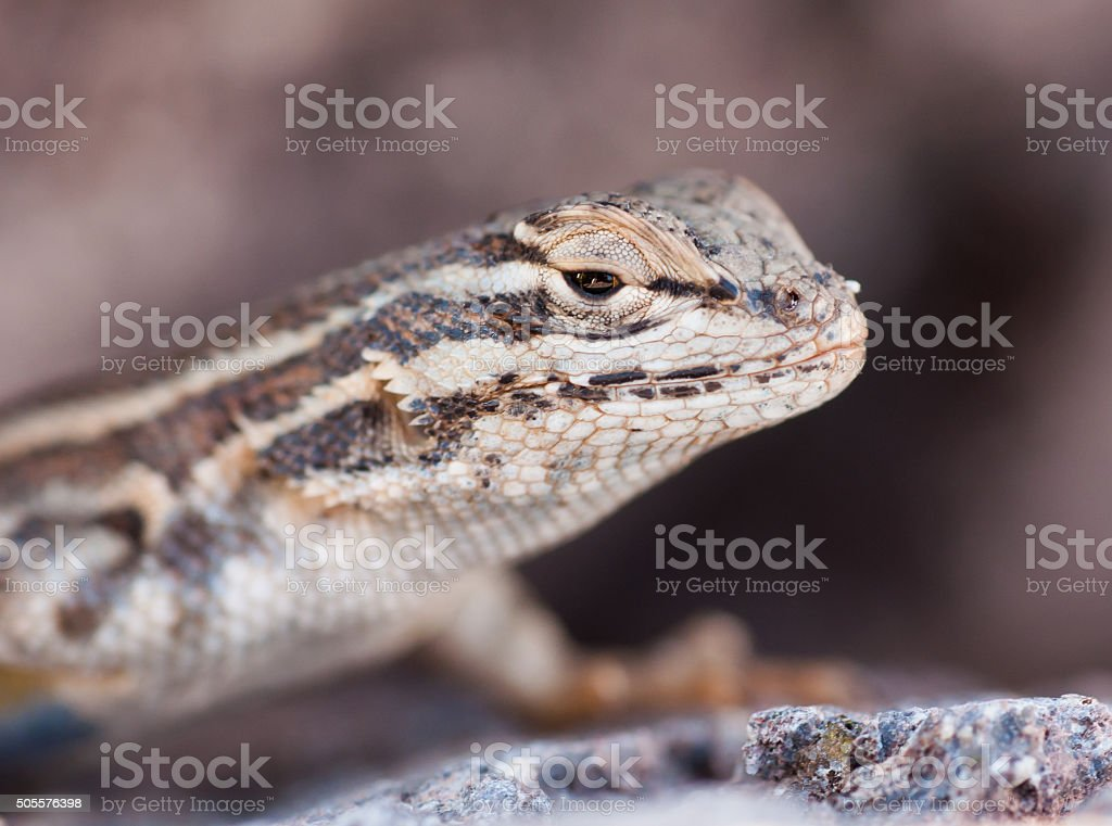 Happy Lizard Day stock photo