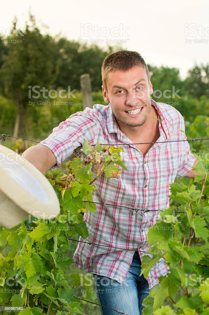 Happy male farmer at the vineyard stock photo