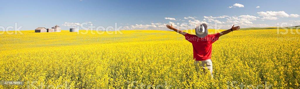 Happy Man in Canola Field stock photo