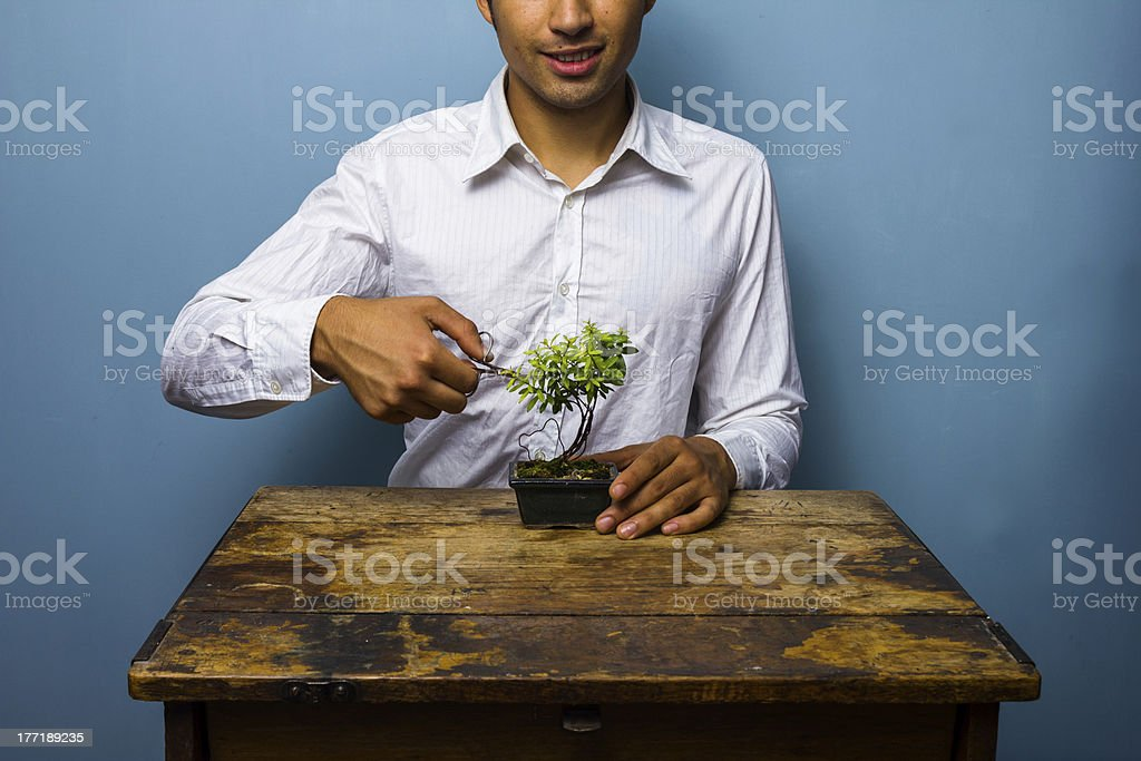 Happy man pruning his bonsai tree royalty-free stock photo