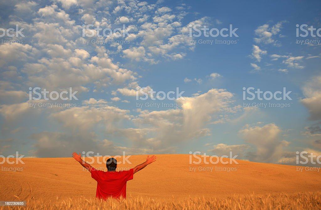 A happy man throws his arms up in a wheat field. royalty-free stock photo