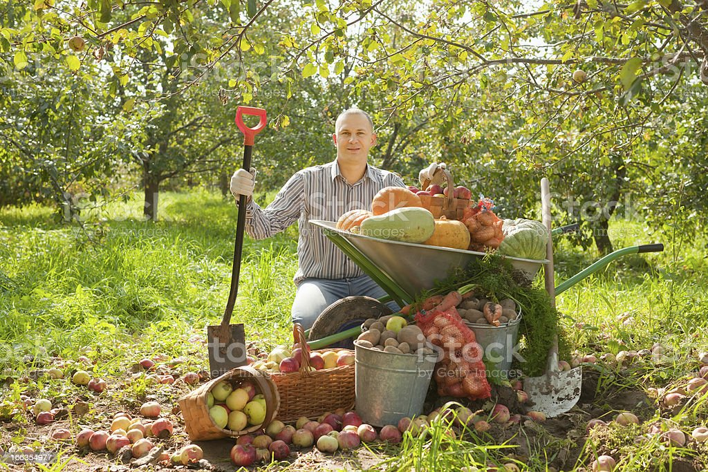 Happy man with vegetables harvest royalty-free stock photo