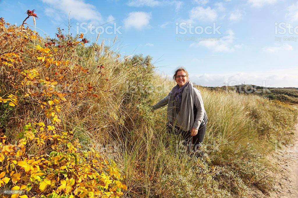 happy mature woman picking sea buckthorn in autumn stock photo