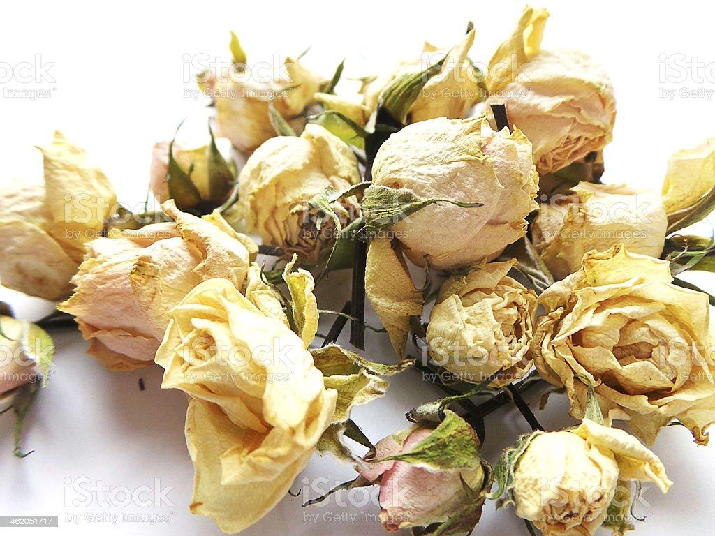 Happy memories of beautiful dried roses stock photo