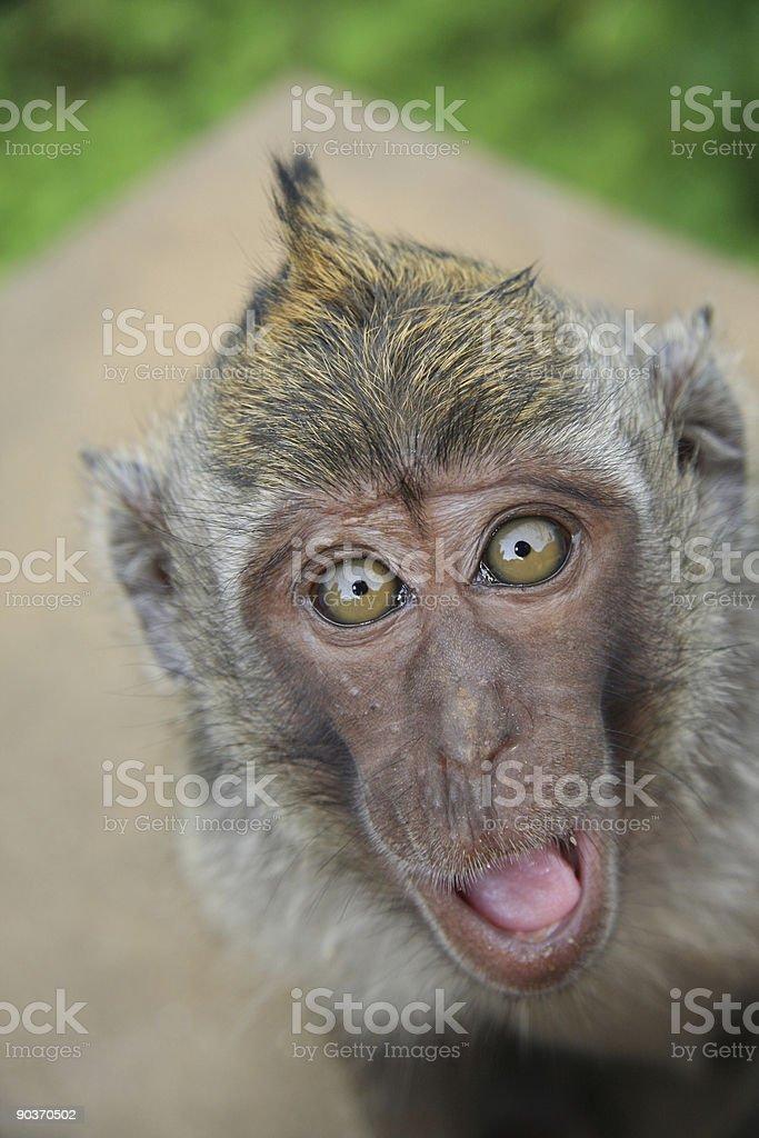 Happy monkey royalty-free stock photo