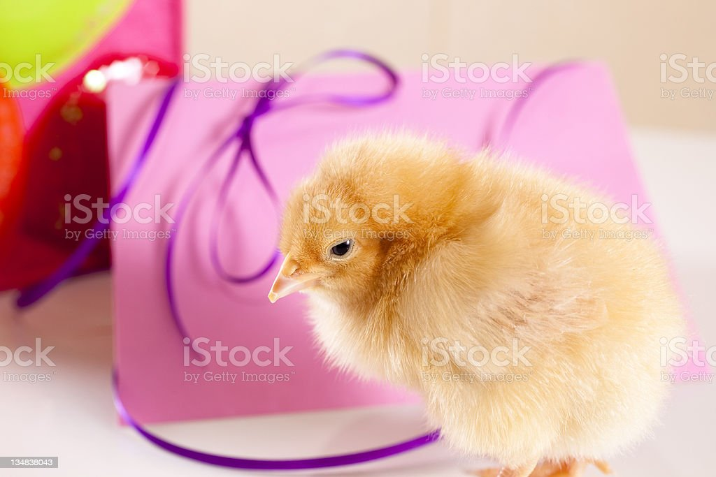 Happy Mother's Day card with chick royalty-free stock photo
