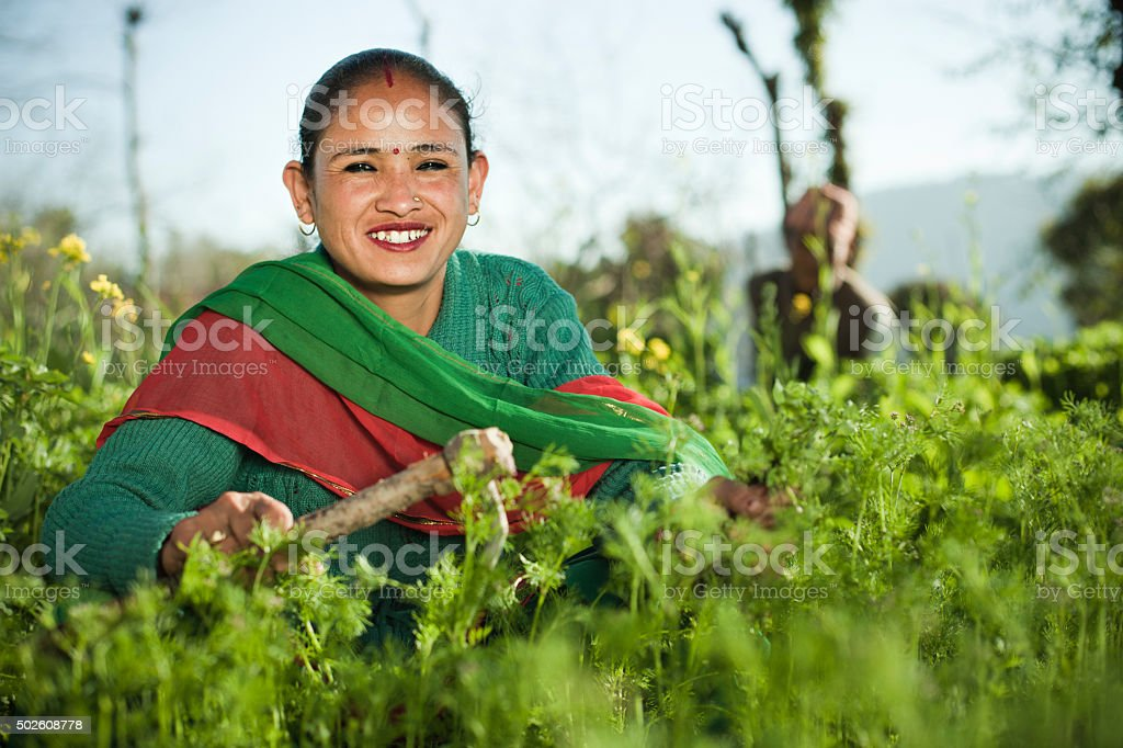 Happy Nepalese peasant woman working in farm. stock photo