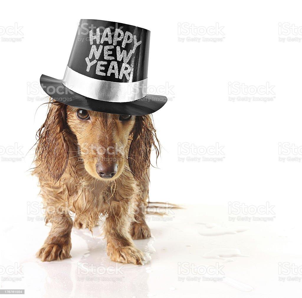 Happy new year dog royalty-free stock photo