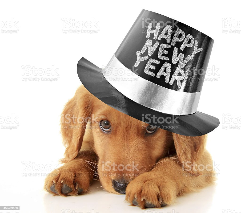 Happy New Year puppy stock photo