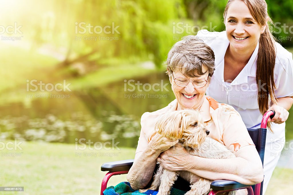 Happy old woman in wheelchair with smiling nurse  and lapdog stock photo