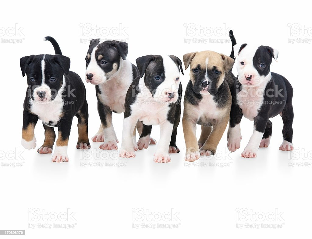 Happy pack of puppies! royalty-free stock photo