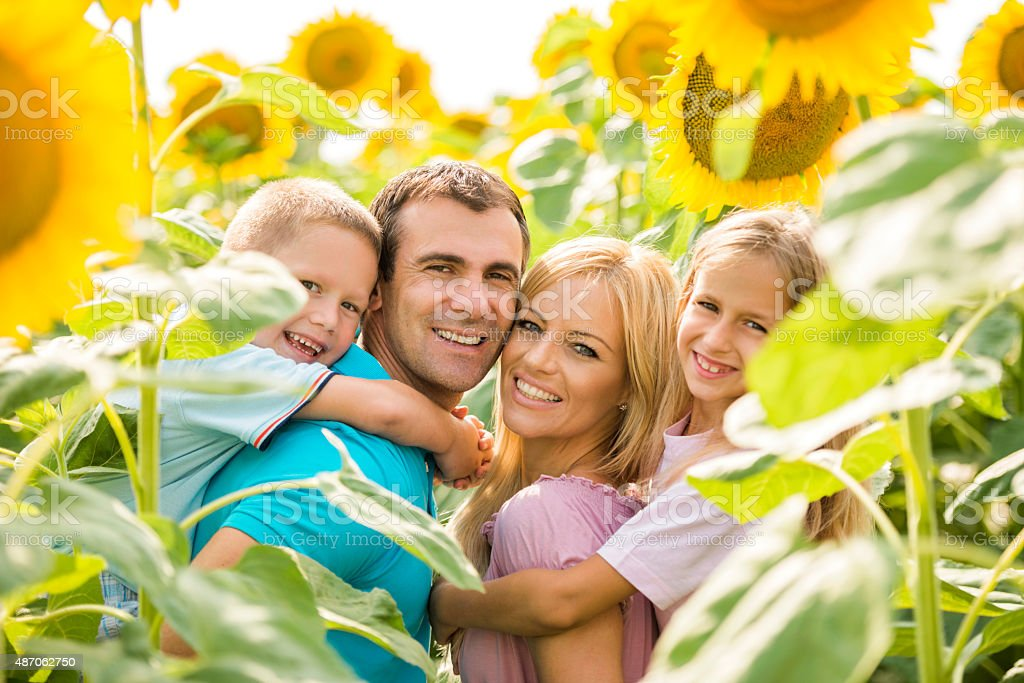 Happy parents piggybacking their children among sunflowers. stock photo