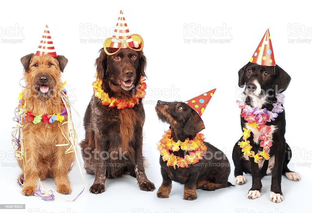 Happy Party Dogs royalty-free stock photo