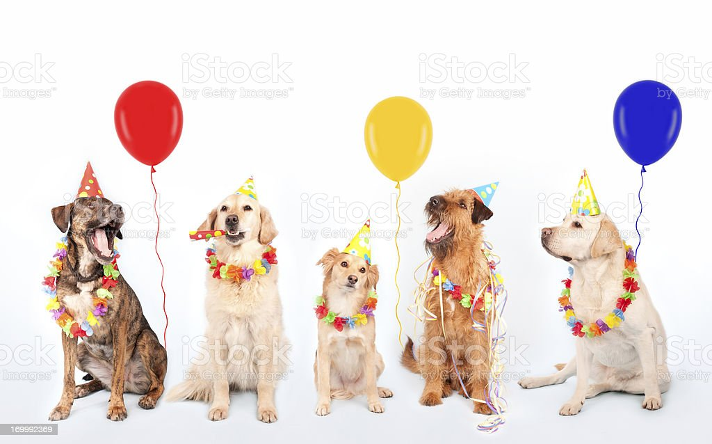 Happy Party Dogs stock photo