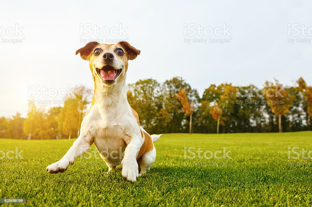 Happy playfull dog stock photo