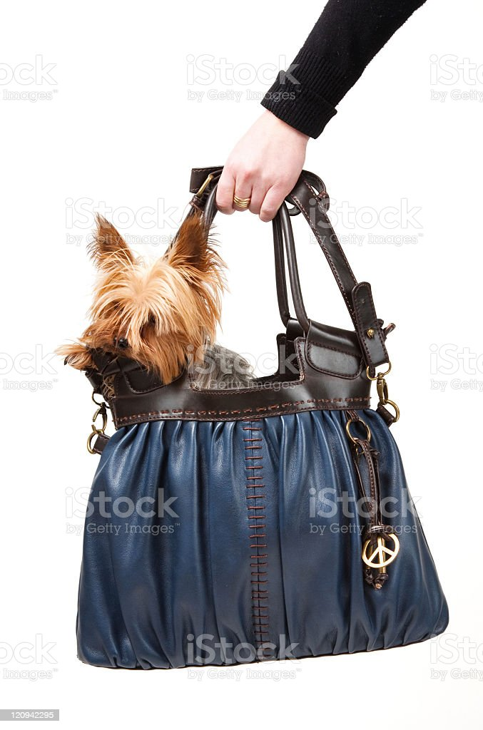 Happy puppy in a bag. royalty-free stock photo